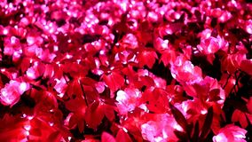 Decorative red flowers with glowing bulbs stock video