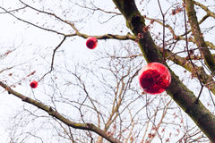 Decorative red glass new year baubles on tree Stock Photo