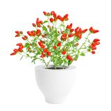 Decorative red hot chili pepper planted white ceramic pot. Isolated on white background. 3D Rendering, Illustration vector illustration