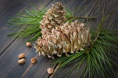 Decorative resinous fir-cones with conifer needle branches. And fir nuts on dark wooden background Stock Photo