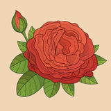 Decorative  rose with bud Royalty Free Stock Photos