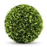 Decorative round plant isolated on white Royalty Free Stock Photos