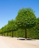 Decorative round trees Stock Image