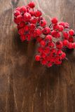 Decorative rowanberry on the table Royalty Free Stock Image