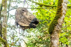 Free Decorative Scary Cow Scull Hanging From Tree 2 Royalty Free Stock Photography - 134435997