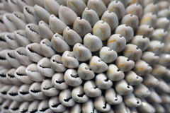 Decorative sea shell ball Royalty Free Stock Images