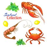 Decorative seafood set. realistic sketched prawn or shrimp, lobster, crayfish and crab with lemon and bunch of parsley