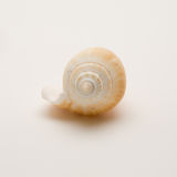 Decorative seashell. On a white background royalty free stock images