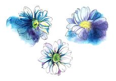 Decorative set of chrysanthemum flowers. Watercolor sketch. Hand-drawn illustration royalty free stock photo