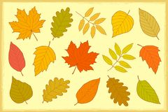 Set of hand drawn isolated autumn leaves. Decorative set of hand drawn colorful isolated autumn leaves Stock Photos