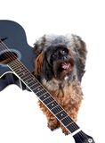 Decorative shaggy doggie and black guitar. Stock Image