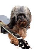 Decorative shaggy doggie and black guitar. Stock Photography