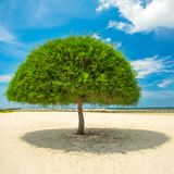 Decorative shaped tree Stock Images