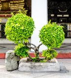 Decorative shaped trees on the temple Royalty Free Stock Photo