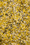 Decorative shell texture, yellow fractions Stock Photography