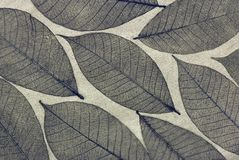 Decorative skeleton leaf Stock Photo