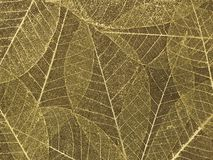 Decorative skeleton leaf background royalty free stock images