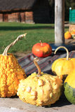Decorative small pumpkin. Seasonal plant baby pumpkin ready to carving Royalty Free Stock Images