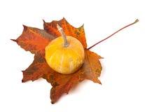 Decorative small pumpkin on autumn maple-leaf Stock Photo