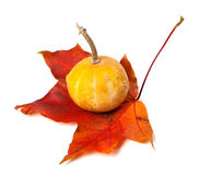 Decorative small pumpkin on dried autumn maple-leaf Stock Photography