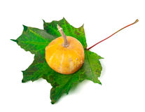 Decorative small pumpkin on green maple-leaf Royalty Free Stock Images