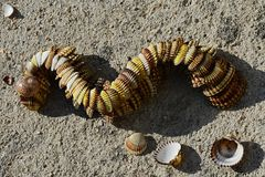 Decorative snake or dragon made of bivalve mollusc clam seashells placed on concrete beach molo. In afternoon sunlight Stock Image