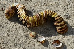 Decorative snake or dragon made of bivalve mollusc clam seashells placed on concrete beach molo. Afternoon sunshine Stock Photos
