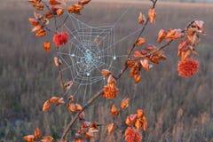 Decorative spider Stock Images