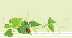 Decorative sprig with leaves, ladybird and bubbles Royalty Free Stock Image