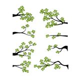 Decorative Spring Branch Tree Silhouette With Green Leaves Stock Images