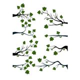 Decorative Spring Branch Tree Silhouette With Green Leaves Royalty Free Stock Photo