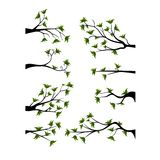 Decorative Spring Branch Tree Silhouette With Green Leaves Stock Photography