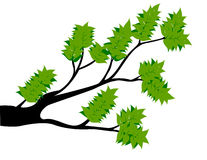 Decorative Spring Branch Tree Silhouette With Green Leaves Royalty Free Stock Images