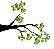 Decorative Spring Branch Tree Silhouette With Green Leaves Royalty Free Stock Photos