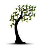 Decorative Spring Branch Tree Silhouette With mango Royalty Free Stock Photos