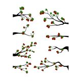 Decorative Spring Branch Tree Silhouette With strawberries Royalty Free Stock Images