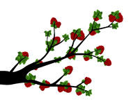 Decorative Spring Branch Tree Silhouette With strawberries Stock Photos