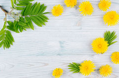 Decorative spring frame of yellow dandelion flowers and green leaves on light blue wooden board. Copy space, top view. Stock Image