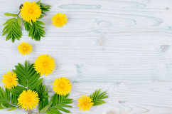 Decorative spring frame of yellow dandelion flowers and green leaves on light blue wooden board. Copy space, top view. Stock Photos