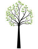 Decorative Spring Tree Silhouette With Green Leaves Royalty Free Stock Photography