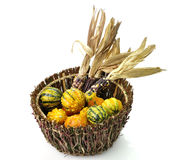 Decorative Squash And Colorful Corn Stock Photography