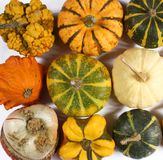 Decorative Squash, cucurbitaceous, pumpkin, on white background royalty free stock images