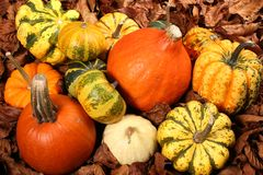 Decorative Squash, cucurbitaceous, pumpkin, on white background royalty free stock photography
