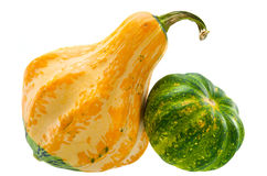 Decorative squashes isolated on white background Royalty Free Stock Image