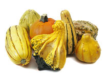 Decorative squashes and pumpkin on white Stock Photos