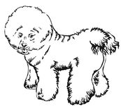 Decorative standing portrait of dog Bichon Frise vector illustration. Decorative portrait of standing in profile Bichon Frise, vector isolated illustration in stock illustration