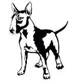 Decorative standing portrait of dog Bull terrier, vector illustr Royalty Free Stock Images