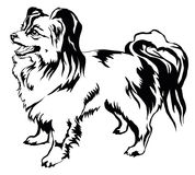 Decorative standing portrait of dog Papillon vector illustration. Decorative portrait of standing in profile dog Papillon, vector isolated illustration in black Stock Images