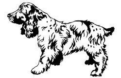 Decorative standing portrait of dog Russian Spaniel, vector. Decorative portrait of standing in profile dog Russian Spaniel, vector isolated illustration in Stock Image