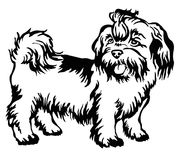 Decorative standing portrait of dog shih-tzu, vector. Decorative portrait of standing in profile dog shih-tzu, vector isolated illustration in black color on Royalty Free Stock Photo